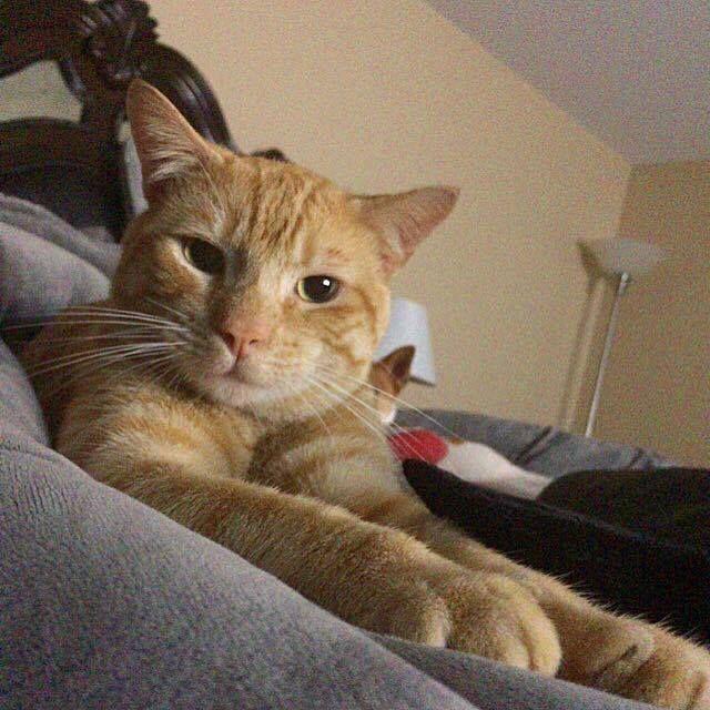 Patti Marconi Hawk Shared Kitten Associates S Post Missing Cat