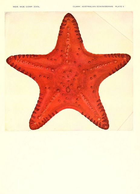 Echinoderms from Australia. Cambridge, U.S.A. Printed for the Museum, 1938