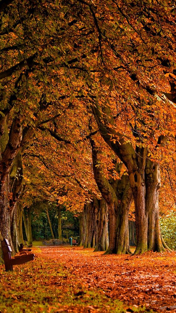 autumn_leaves_park_trees_90986_640x1136