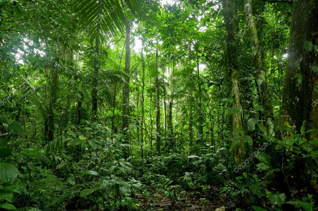 Pin By Katrina Ponce Enrile On Tropical Rainforest Tropical Rainforest Rainforest Rainforest Facts