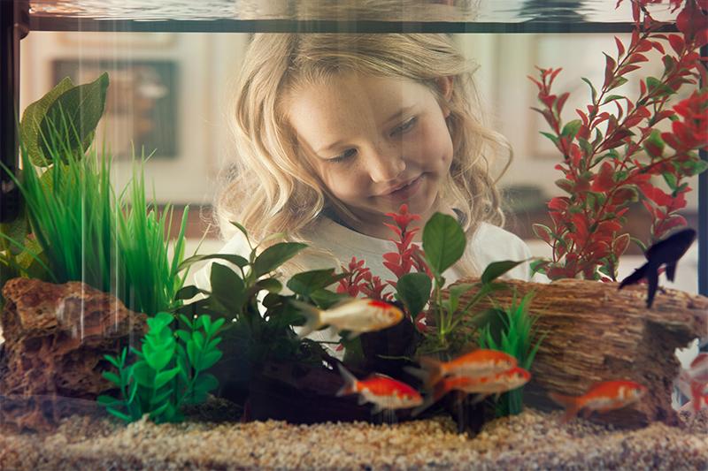 5 Fish Tank Design Tips For A Captivating Aquarium