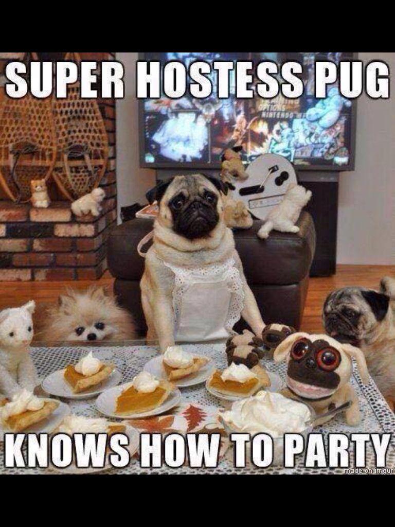 Thanksgiving Pug Pugs Funny Pugs