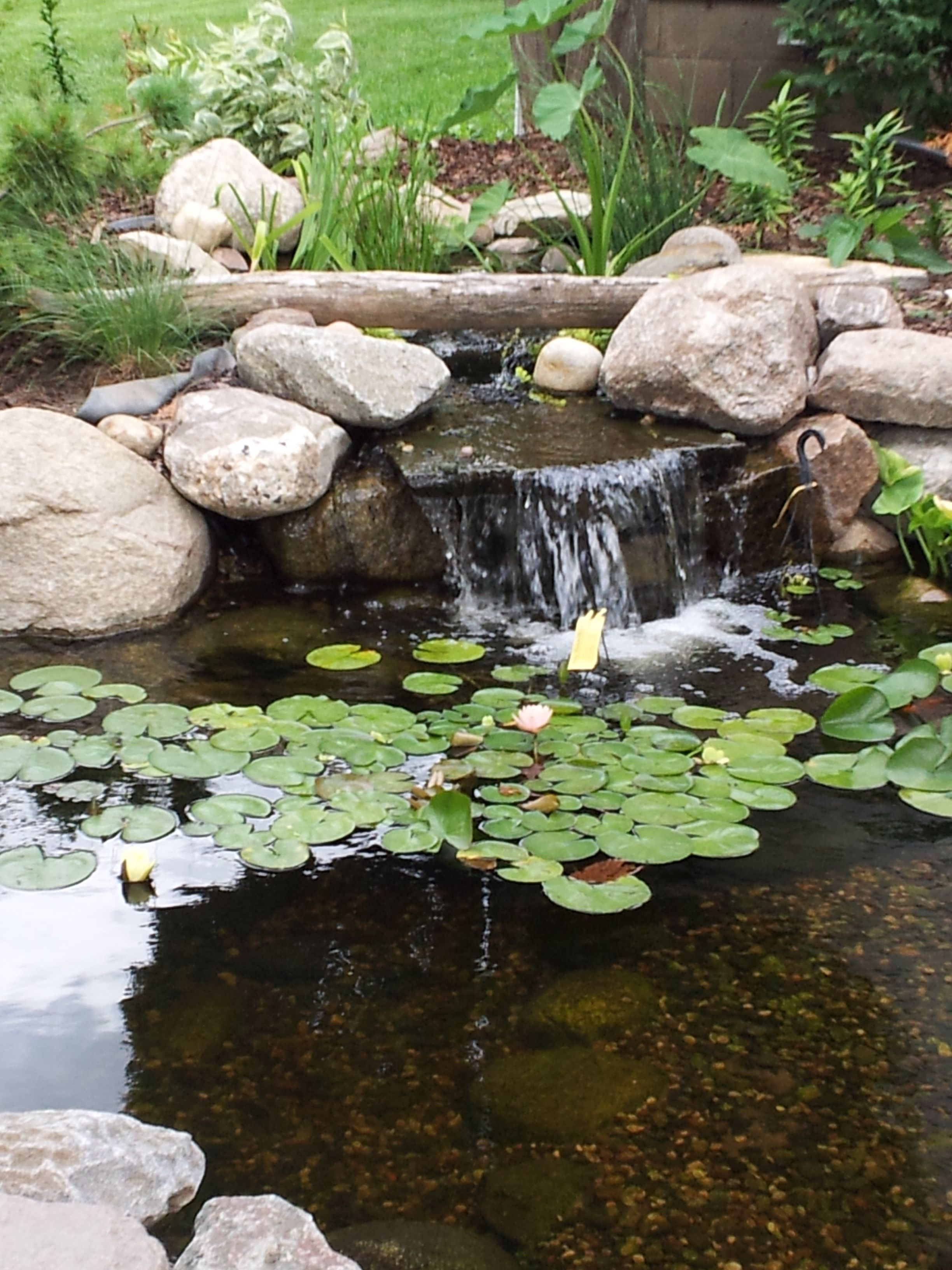 Minnesota. Small backyard pond with a waterfall and a bog ...