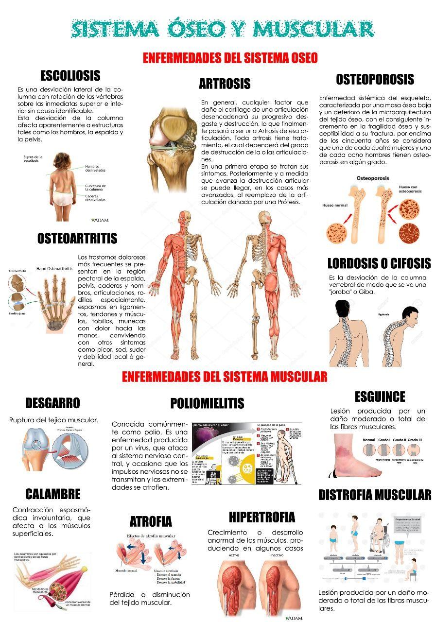 cuales+son+los+ligamentos+del+cuerpo+humano