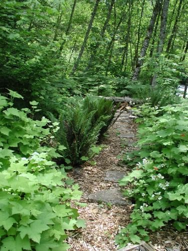 Woodland Garden landscaping with Pacific NW native plants