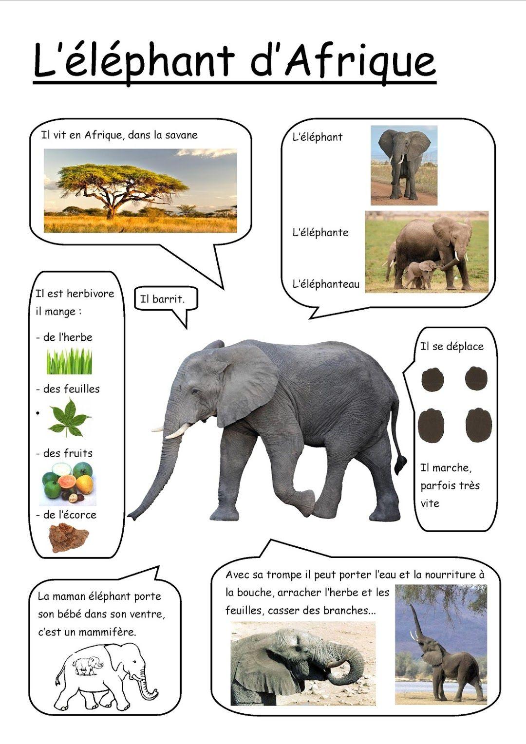 Fiches Google Photos Documentaire Animaux Elmer L Elephant Imagier Animaux