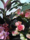 Voilà ma nouvelle plante !! ;)