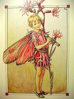 The Ragged Robin Fairy ~ Cicely Mary Barker