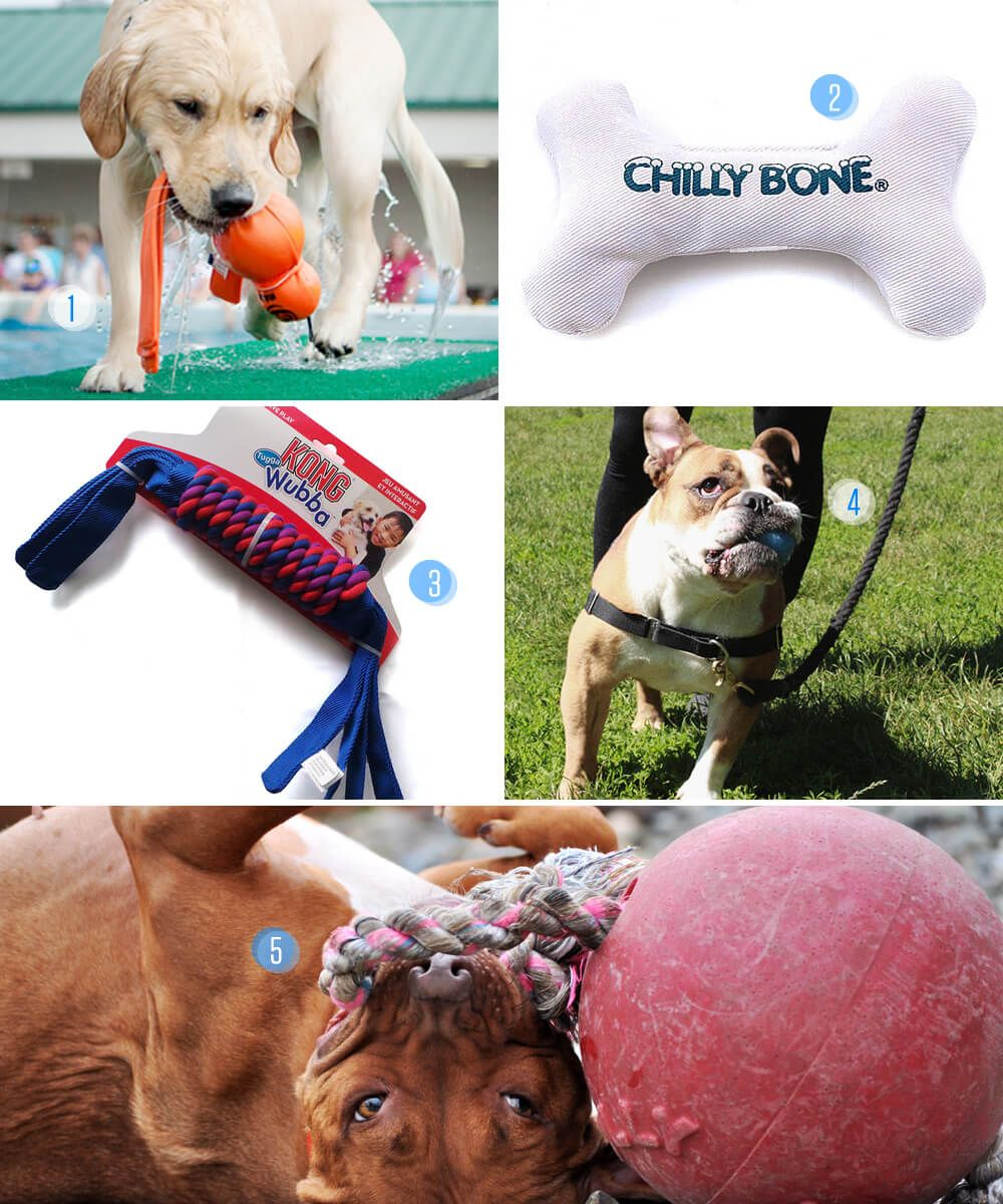 5 Cool Toys For Playing Outside This Summer Best Dogs Your Dog