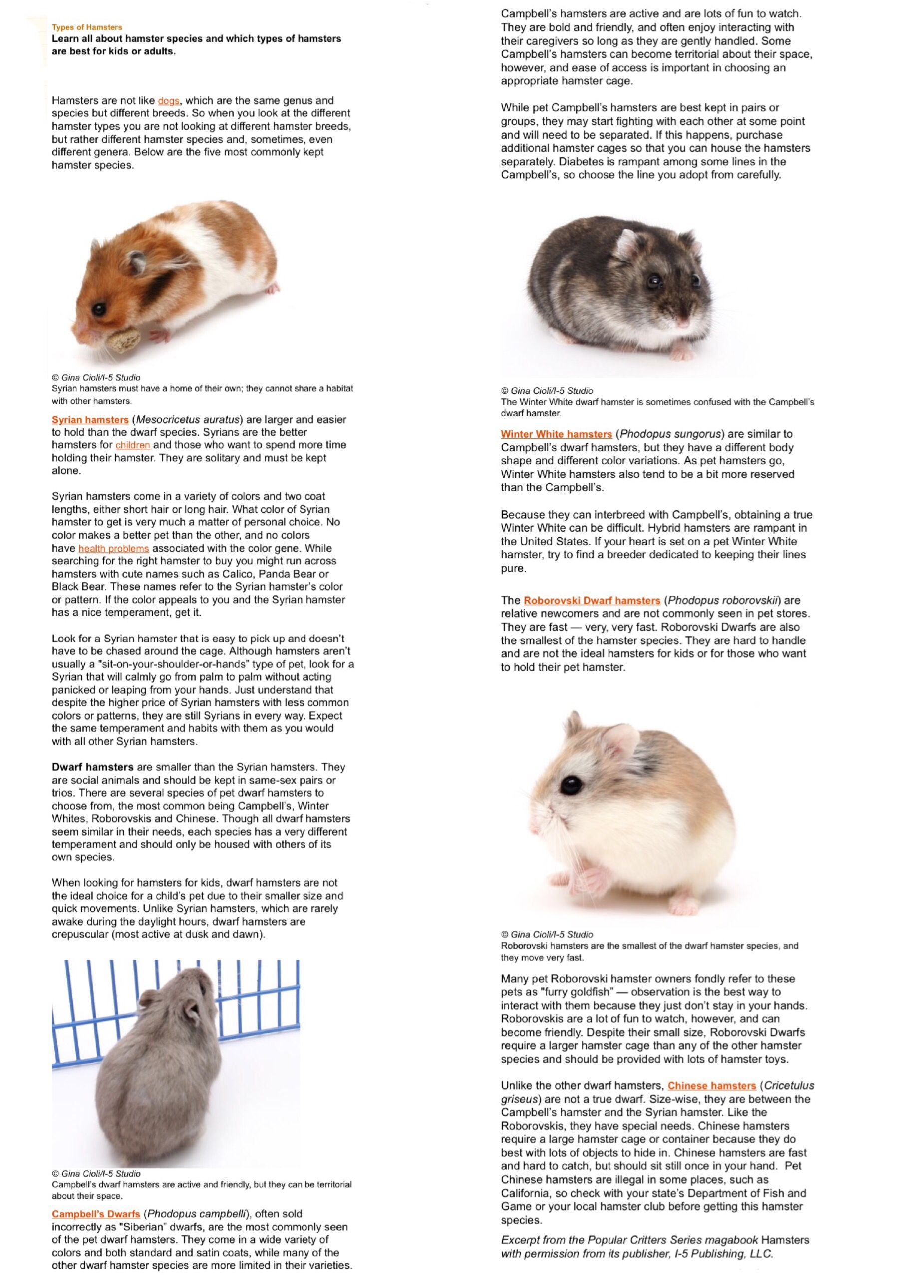 Types Of Hamsters Hamster Species Little Pets Hamster Care