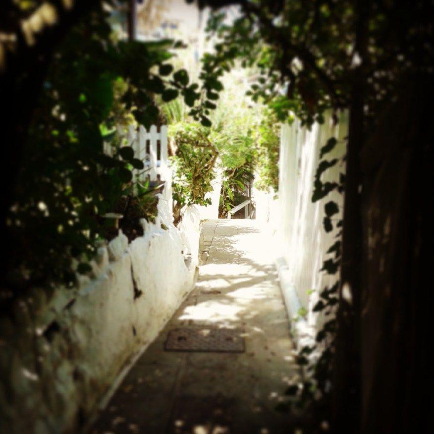 secret jungle walkways