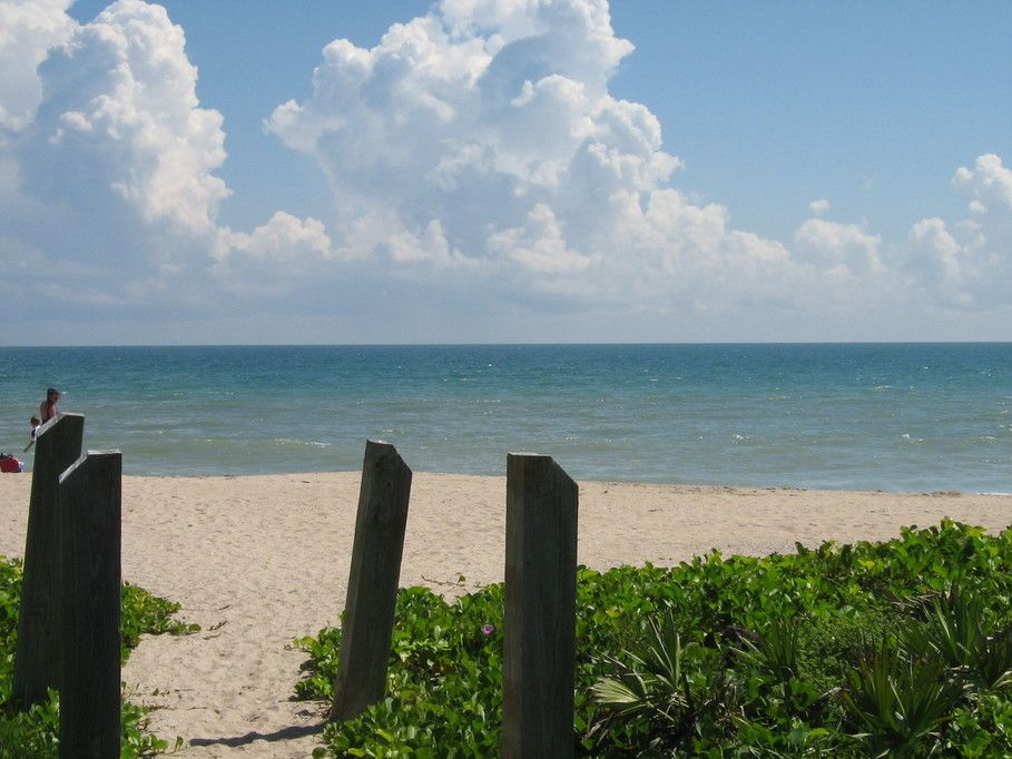 Jensen Beach Fl Sea Turtle Nesting Cove Photo Picture