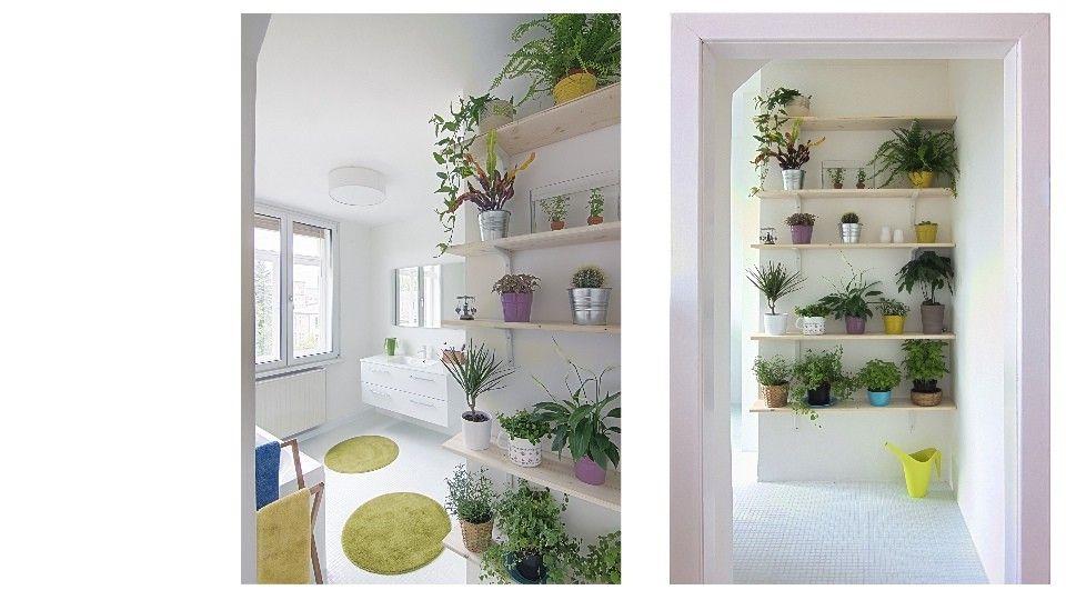 Shelf for plants