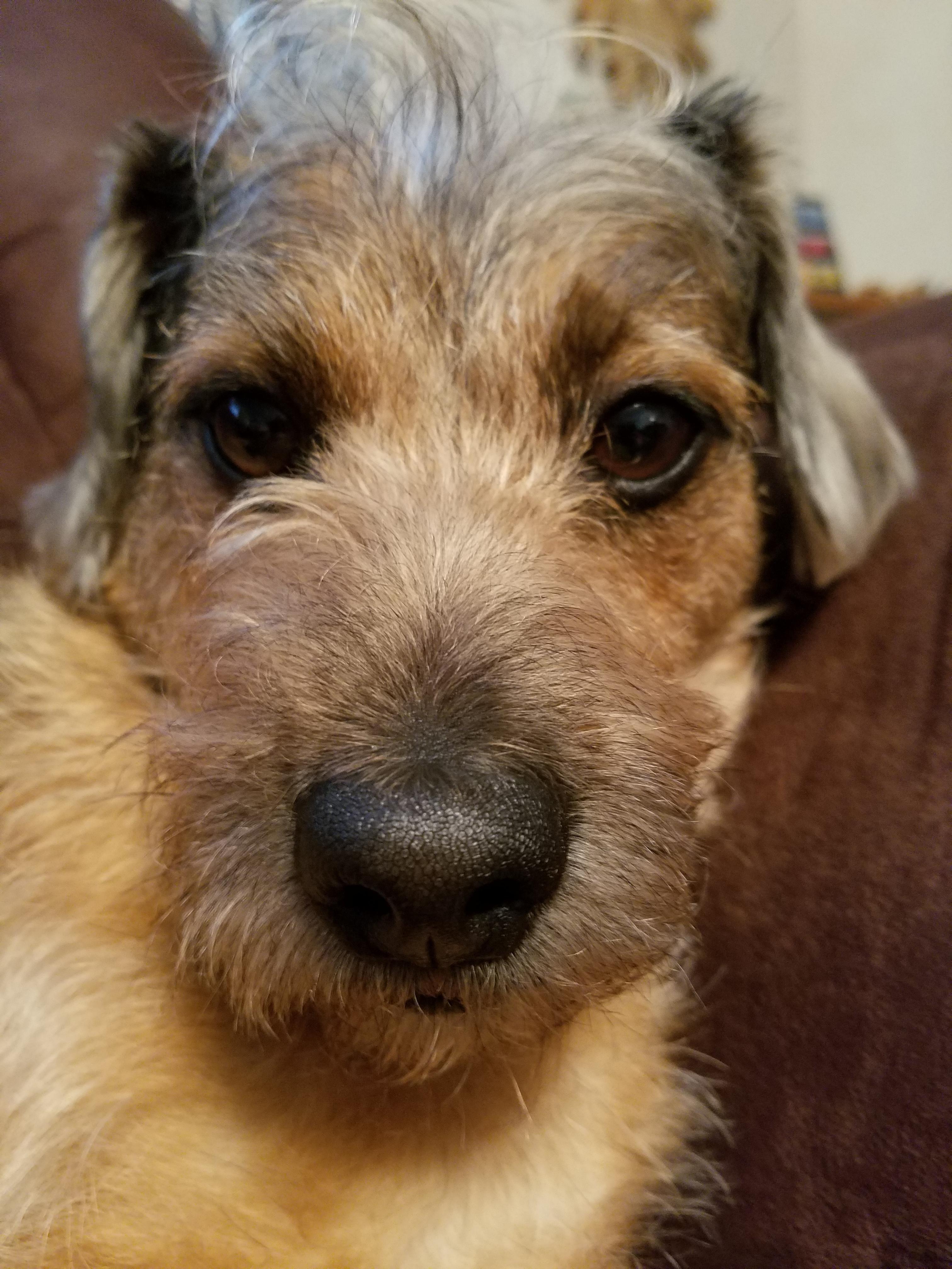 Reddit say hello to my new puppy Milo http://ift.tt/2p9rrK5