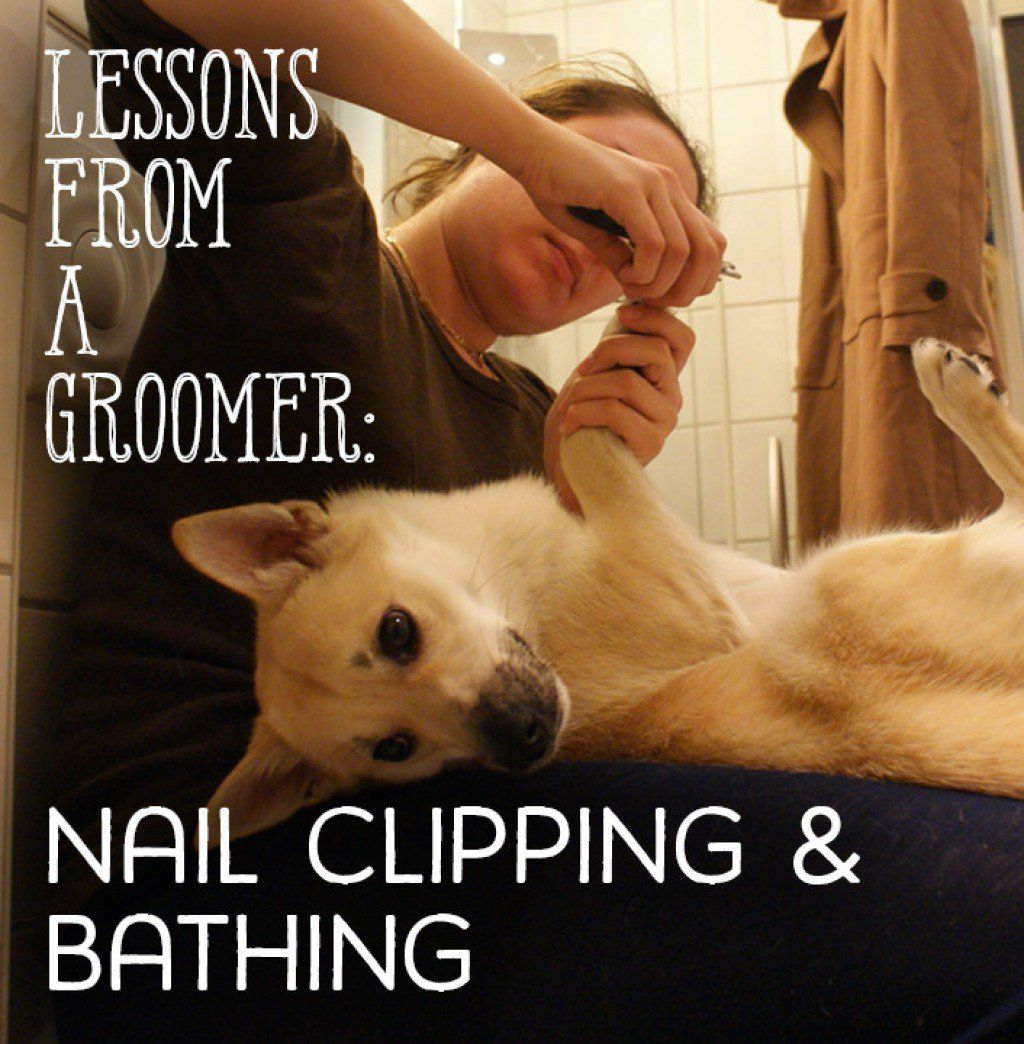 Lessons From A Groomer Nail Clipping Ear Cleaning And Baths