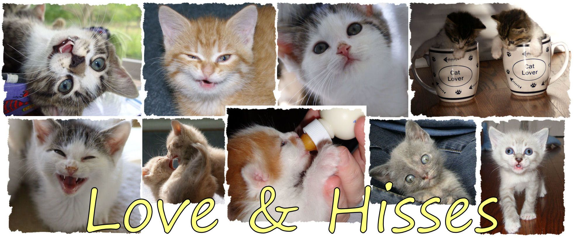 Awesome website w foster kitties; and lovely photos of