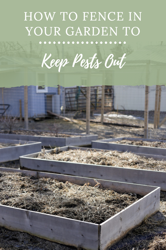 How to fence in your garden to keep pests like deer and ...