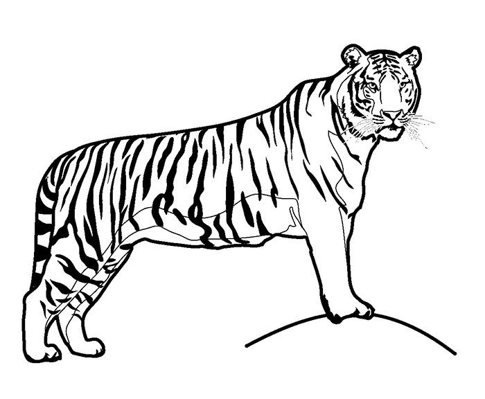 Tiger In Savanna Coloring Page