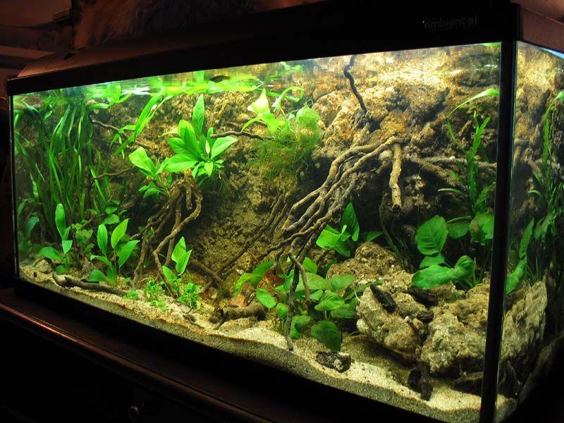 Pin On Family Aquarium Fish Ideas