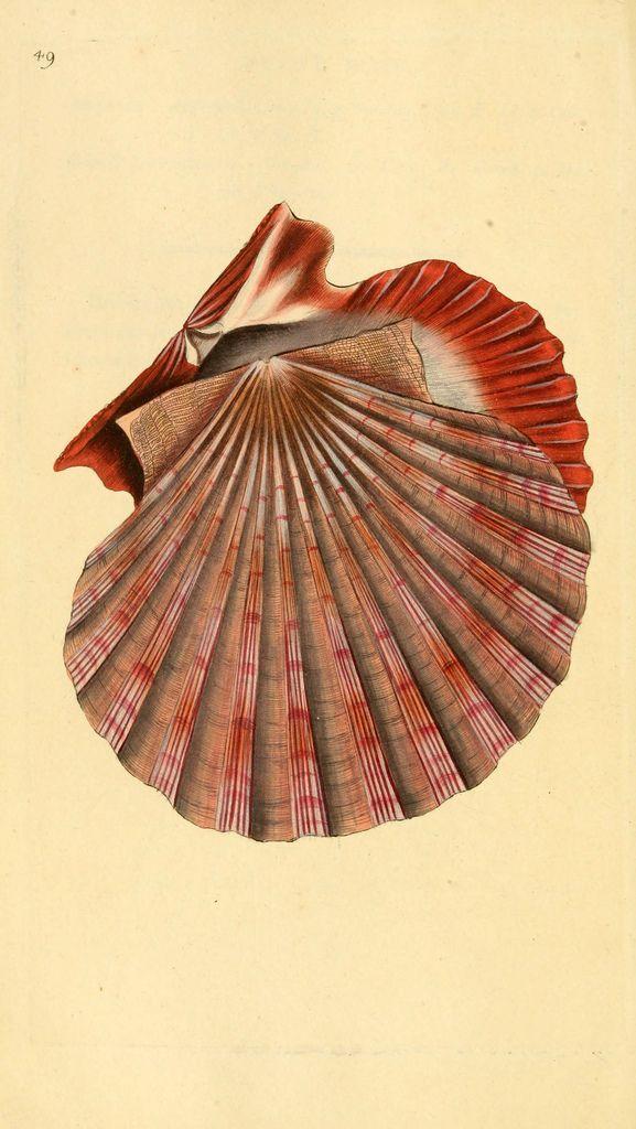 The natural history of British shells. v.1-3.