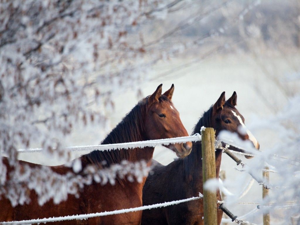 Top Wallpaper Horse Winter - 8846e014dc800cc017d5de83aa329bf9  Graphic_394274.jpg