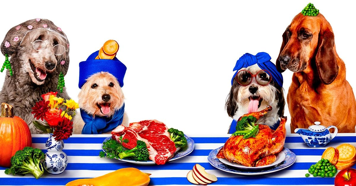 Order our nutritious, readytoeat dog food, served in
