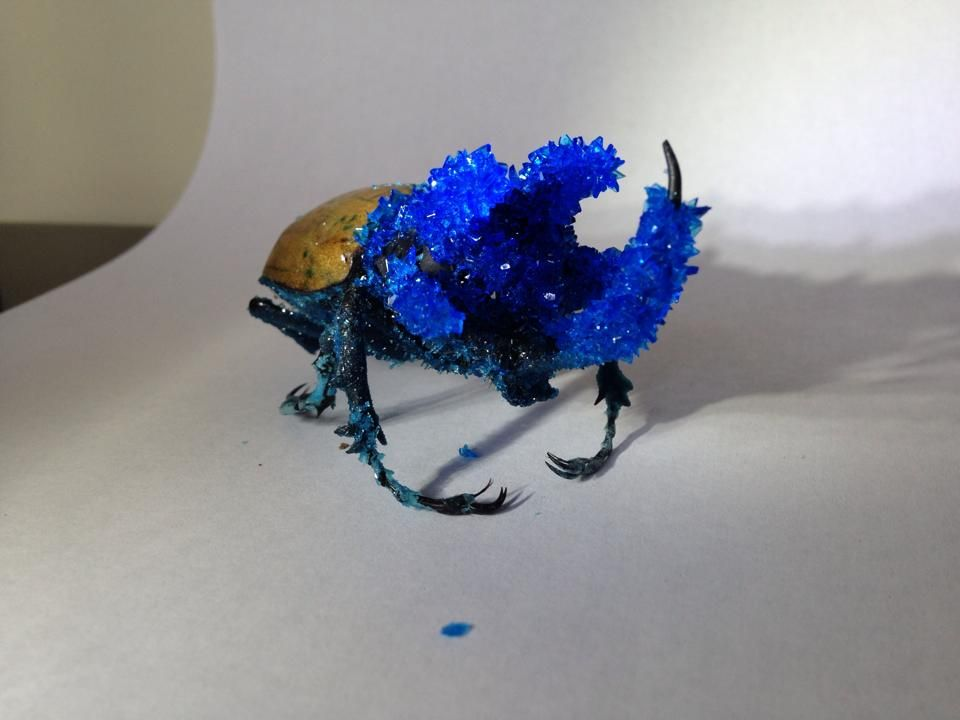 This is a hand crystallized beetle, that has been submerged in a super saturated solution to yield this unique piece of artwork.  *The crystallizing process can take up to two weeks before being delivered.  *All of the crystals I grow are made using authentic/ pure chemicals and are the cryst...