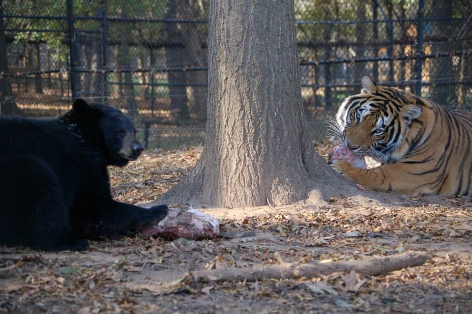 Anne and Doc sharing a nice picnic lunch together! #Doc #Tiger #NoahsArk