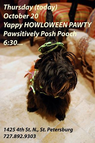 Is there anyone who doesn't want to show off their dog in the best Howl-O-Ween costume? There are plenty of dog-friendly costume contests going on all over #Florida. Here are just a few: Tonight Susan Nice hosts the monthly #YappyHour at Pawsitively Poshpoochclassycats with a HOWL-O-WEEN theme. Refreshments and treats (always de-lish).