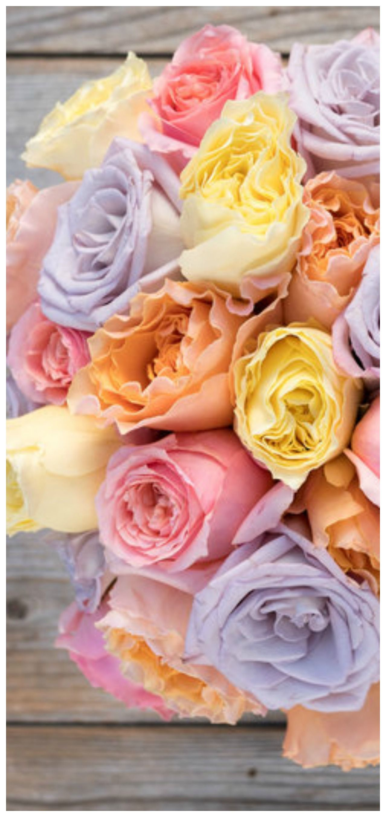 Pin by Tam's Boards ♥ on Beautiful Flowers Flower