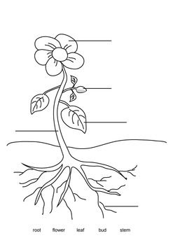 Label A Plant Parts Of A Flower Parts Of A Plant Coloring Pages