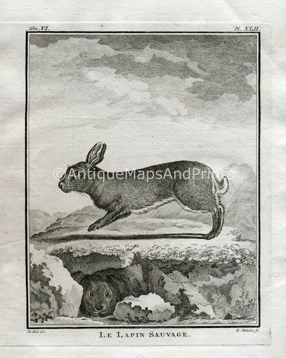 INSTANT DOWNLOAD French Rabbit Bunny 1700s by BackAlleysBackRoads