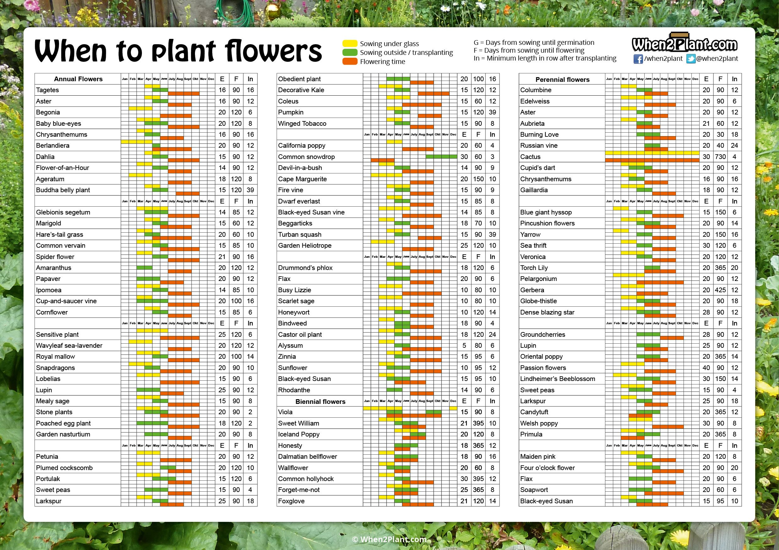 When To Plant Flowers Sowing Calendar Seeds Pots List 1