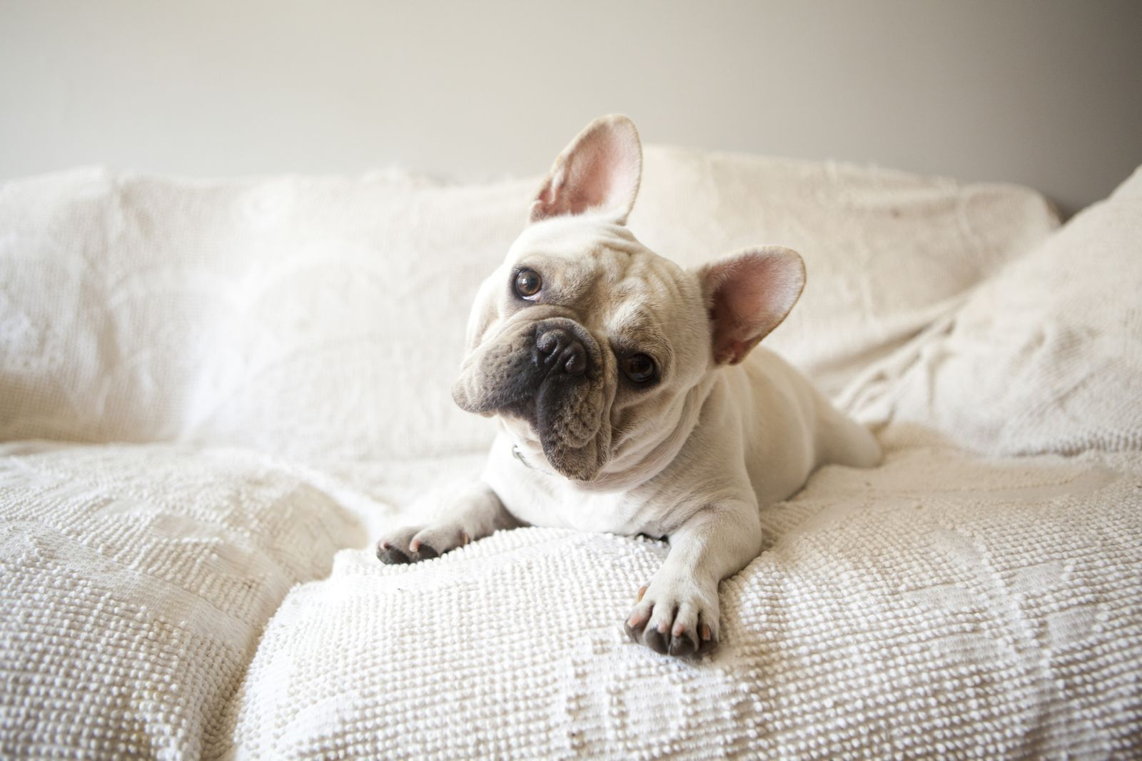 The 15 Laziest Dog Breeds That Are Total Couch Potatoes Cute