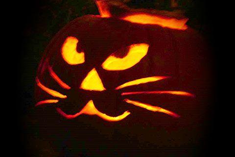 Halloween pumpkin carving cat patterns pumpkin carving for Cat carved into pumpkin