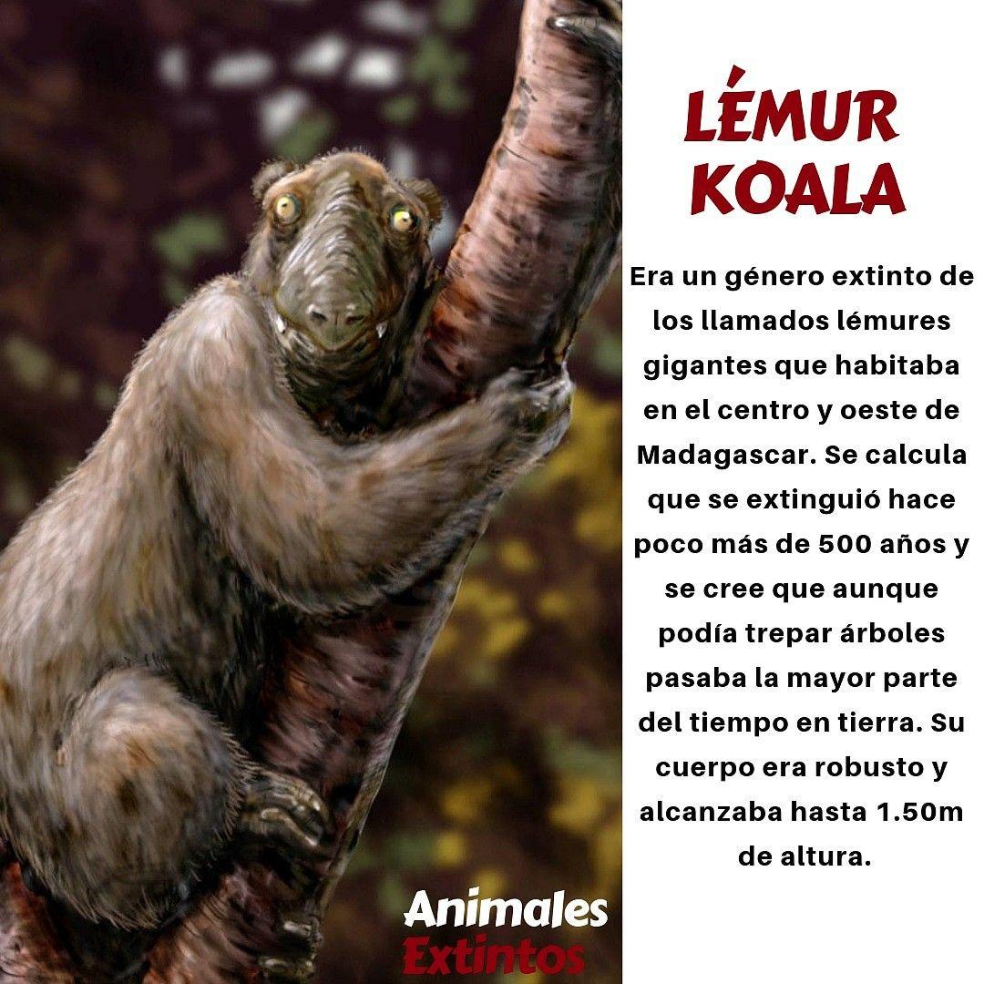 13 Ideas De Animales Extintos Animales Extintos Extintos Animales