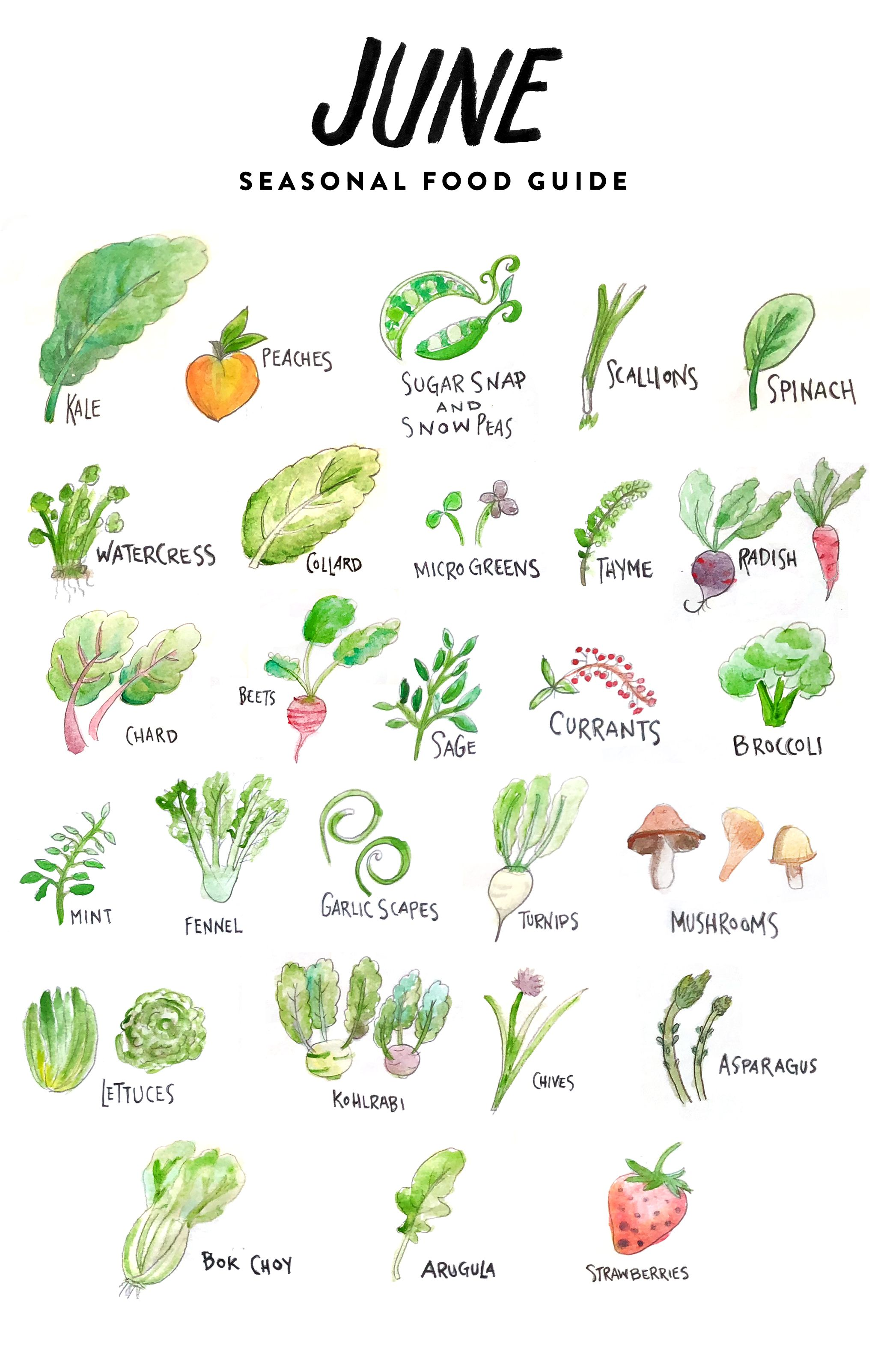 In Season Food List For June Seasonal Food Food Lists Different Fruits And Vegetables