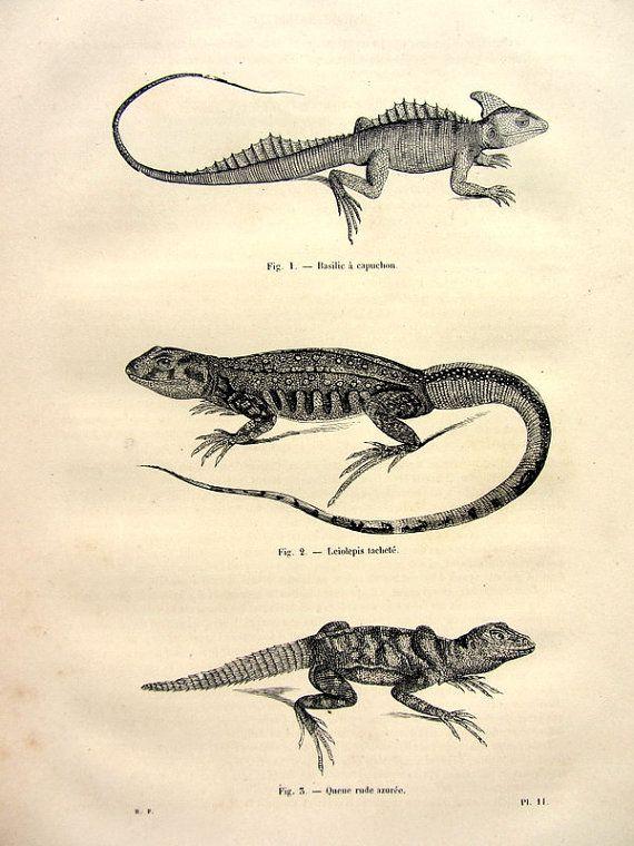 1860 Vintage Reptiles Engraving Original Antique Basilisco Basilisk Print Differents Species Of Lizards Jesus Lizard Plate Illustr Vintage Engraving Antiques