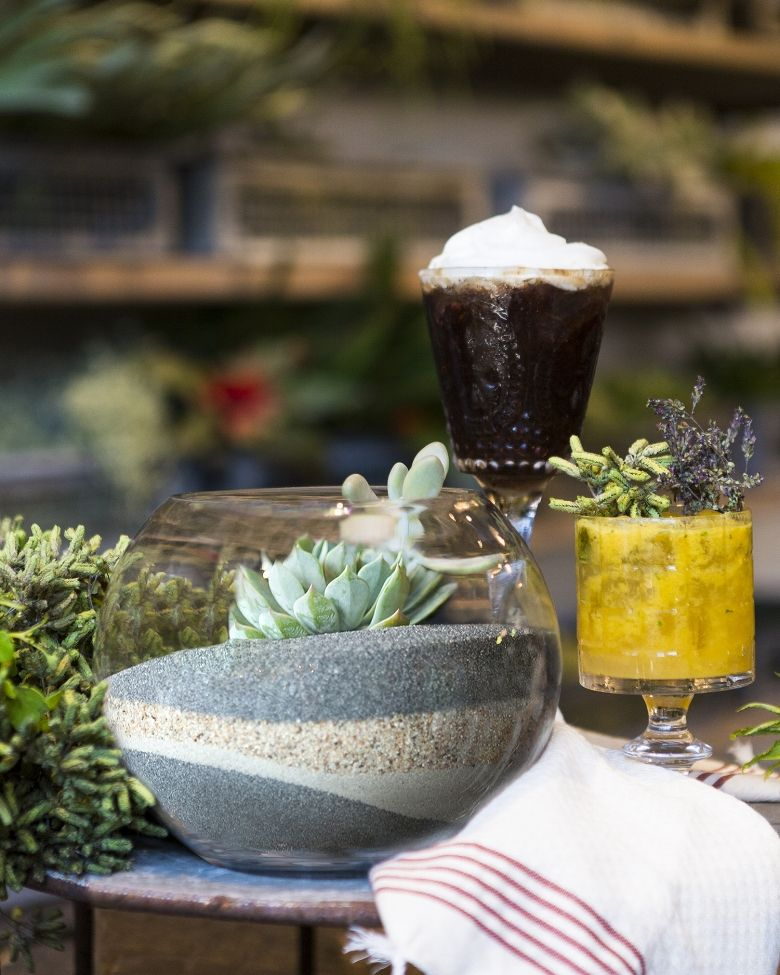 learn + grow: Desert Terrarium — Rolling Greens Nursery & Home