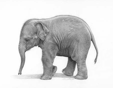 Baby Elephant by David Dancey-Wood | Imagine | Pinterest | Baby ...
