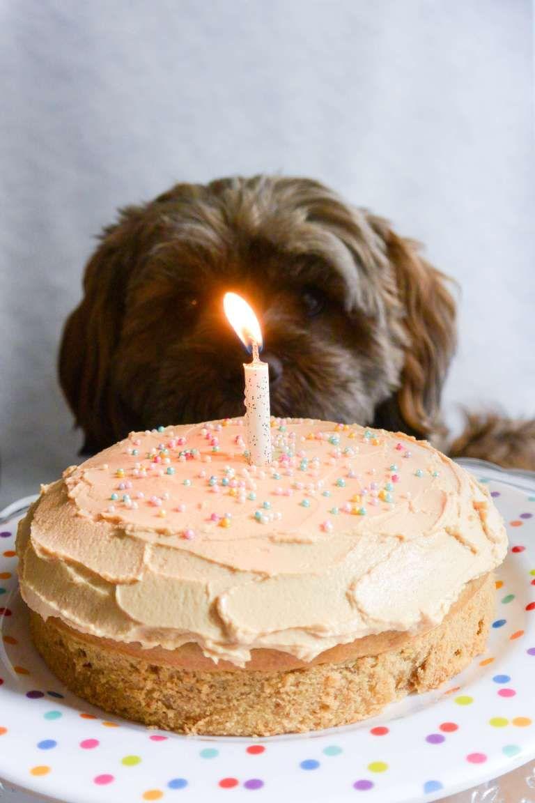 Groovy Mini Dog Birthday Cake Recipe Dog Birthday Cake Recipe Dog Funny Birthday Cards Online Unhofree Goldxyz