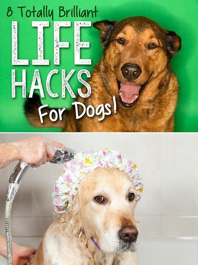 8 Totally Brilliant Life Hacks For Dogs Dogs Dog Mom Dog Care