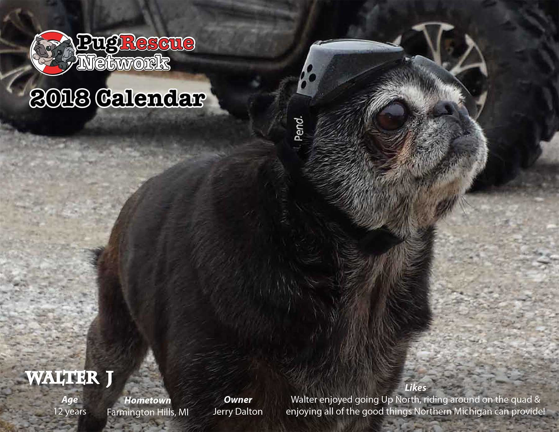 Pug Rescue Network S 2018 Calendar On Sale Now For Only 10 Plus