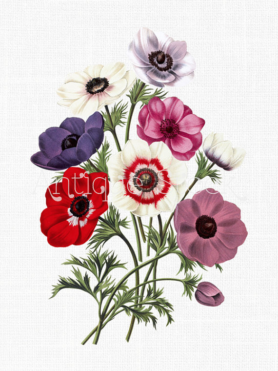 Flower Clip Art Poppy Anemones Digital Download Etsy In 2020 Flower Prints Art Flower Art Flower Wall Art