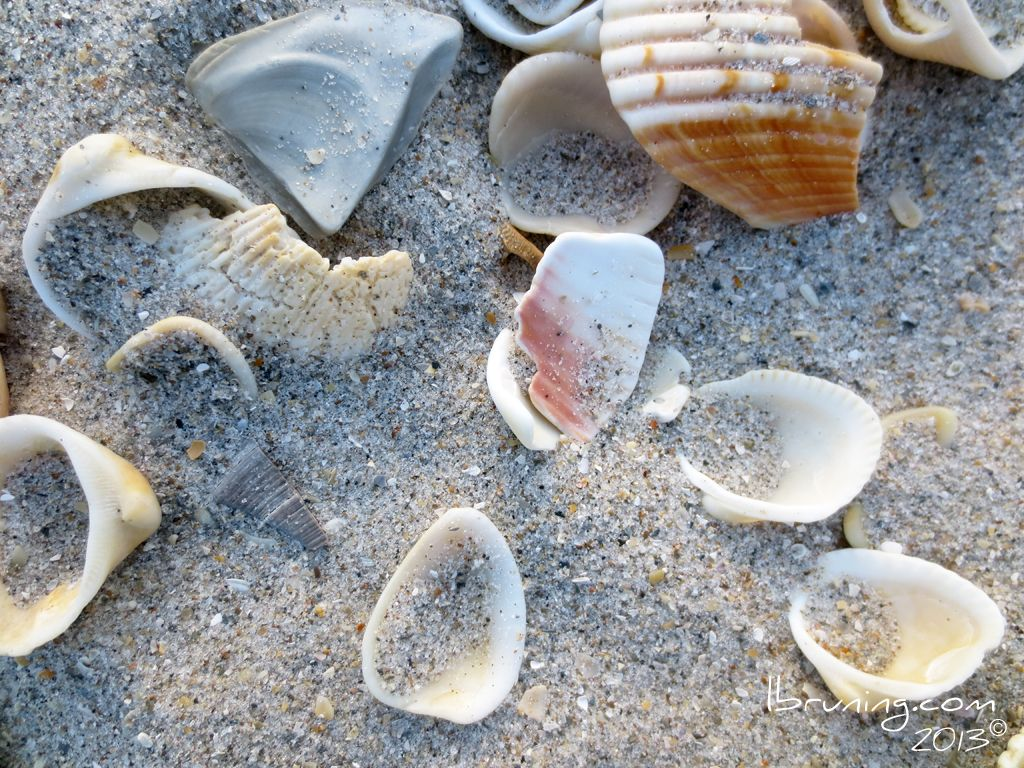 Shells and Sand on the Atlantic Ocean.  (april 2013)