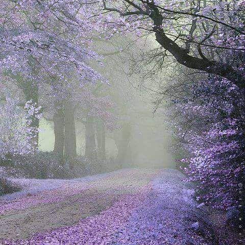 Raining Wallpaper Cool Whatsapp Status 030 Beautiful Nature Beautiful Landscapes Nature Photography