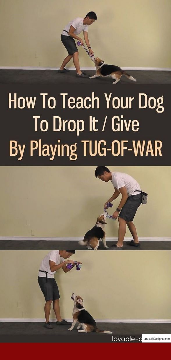 Tips For Potty Training A Beagle Puppy And Pics Of How To Train