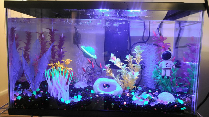 5 Cool Fish Tank Themes That Will Inspire You Cool Fish Tanks Cool Fish Tank Decorations Fish Tank Themes
