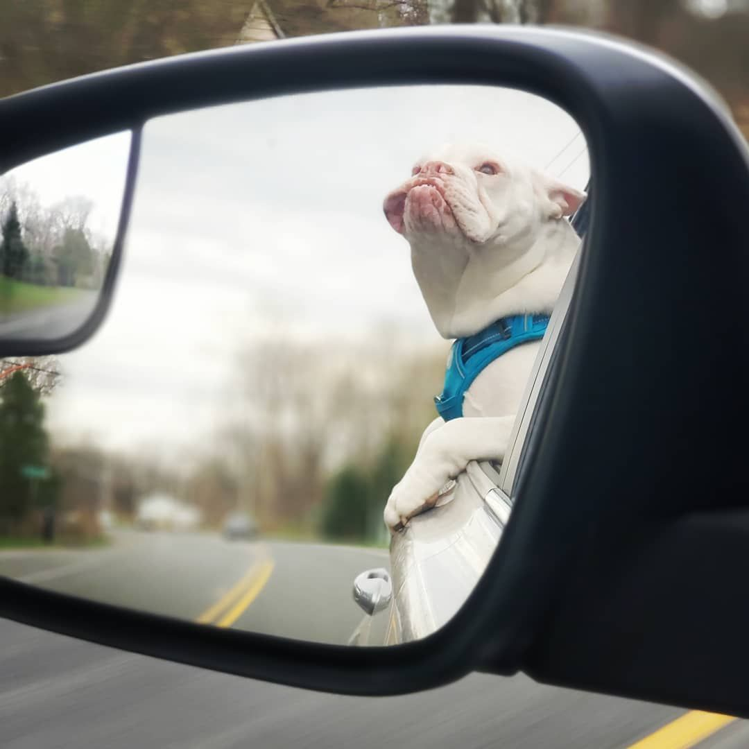 Caution Objects In Mirror May Be Closer Than They Appear