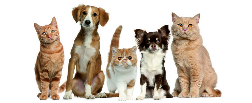 UK emotional support animals (ESA) are pets prescribed by